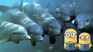 Новогоднее Представление для детей с миньонами в Дельфинарии: дельфины, морские котики и лев