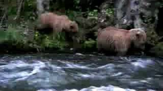 Bears at Russian River Thumbnail