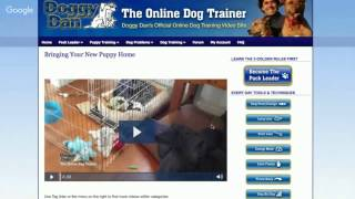 Dog Training Singapore - The Online Dog Trainer