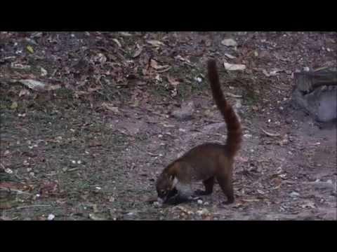 Guatemala Tikal Animales Animals 2015