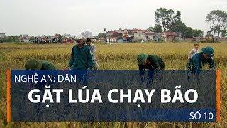 Nghệ An: Dân gặt lúa chạy bão số 10 | VTC1