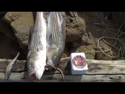 Regreso a pescar en Lake Castaic