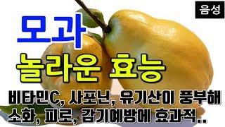 [#모과효과] 모과의 놀라운 효능 9가지 (비타민C, …