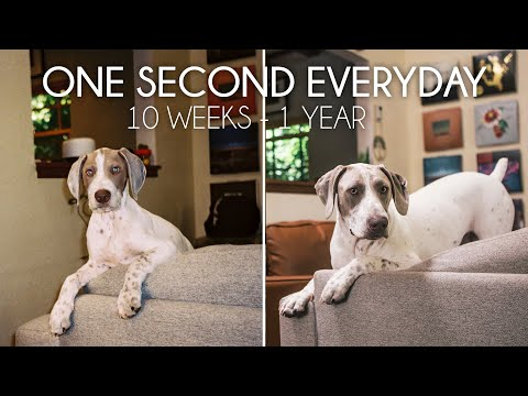Rufus the German Shorthaired Pointer Puppy Growing Up (10 Weeks to 1 Year) | One Second Everyday