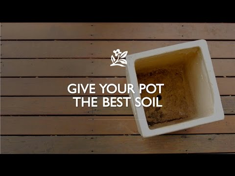 Make A Better Potting Mix | Monrovia Garden
