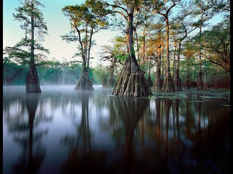 A Passion for Florida Everglades Photography with John Brady