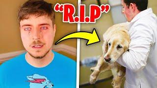 6 YouTubers Caught CRYING ON CAMERA! (MrBeast, Ssundee, DanTDM, Crainer, Guava Juice)