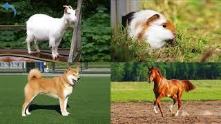 Как говорят животные. Картинки фотографии животных и голоса звуки, которые они издают