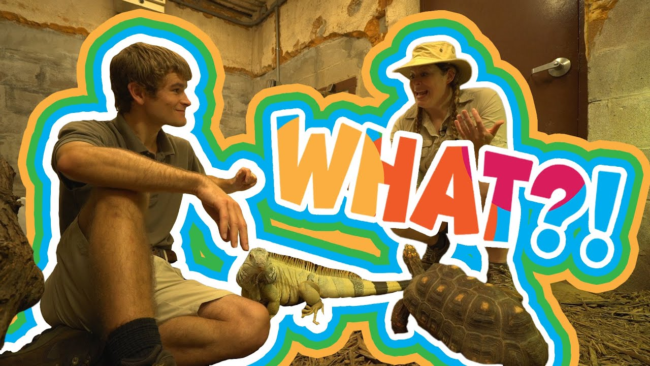 I Can Be What?! | Zookeeper | Part 3 |Reptiles
