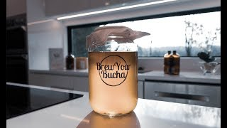Brew Your Bucha 4 Litre Brewing Instructions