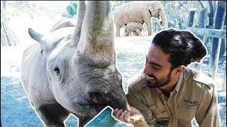 TRABAJANDO EN UN ZOO! Alimentamos Elefantes, Rinocerontes y más animales!