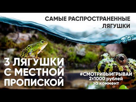 Самые распространенные лягушки и их биотопы