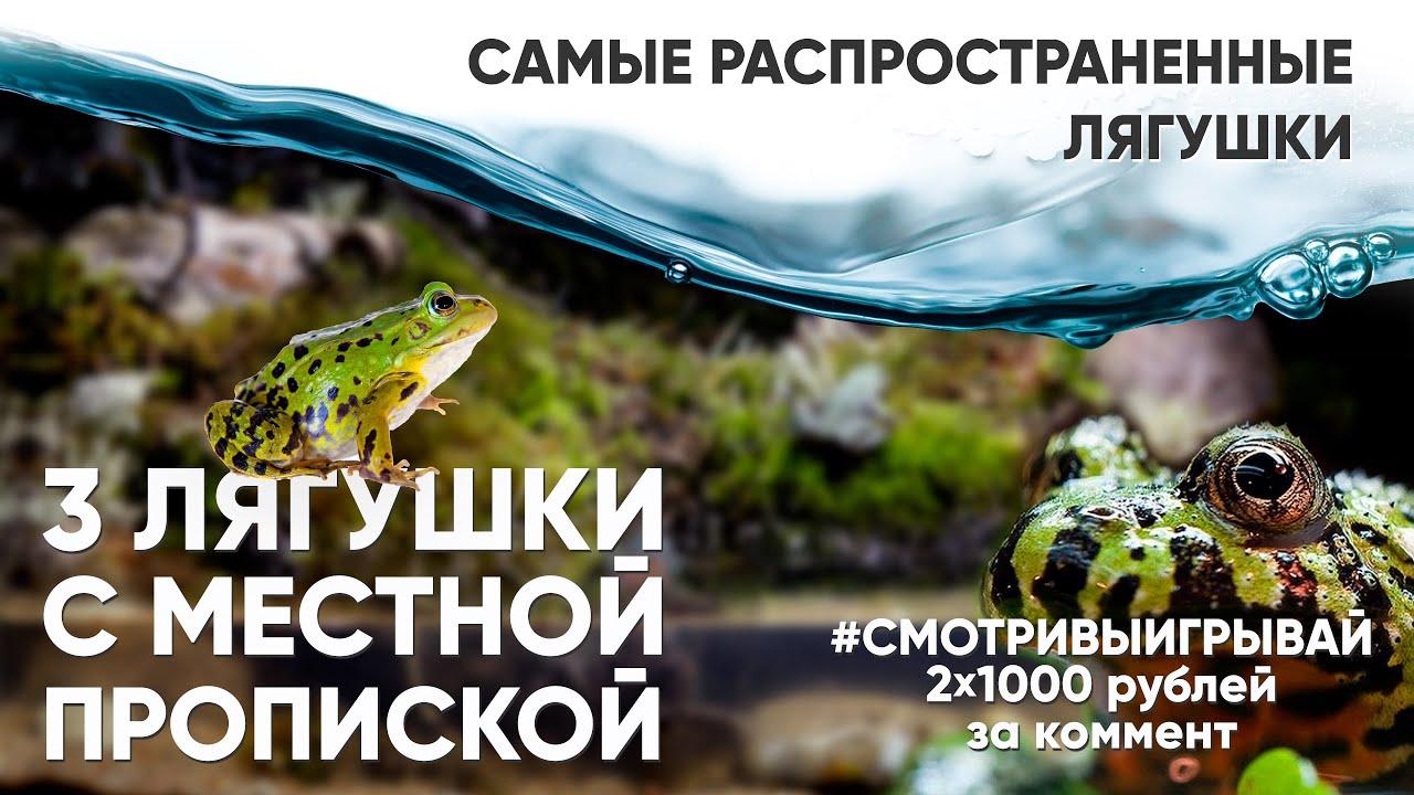 Ночной клуб лягушка свинг ночной клубы в москве