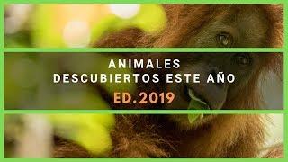 Nuevos Animales descubiertos el último año [Edición 2019]
