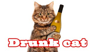 Пьяные кошки