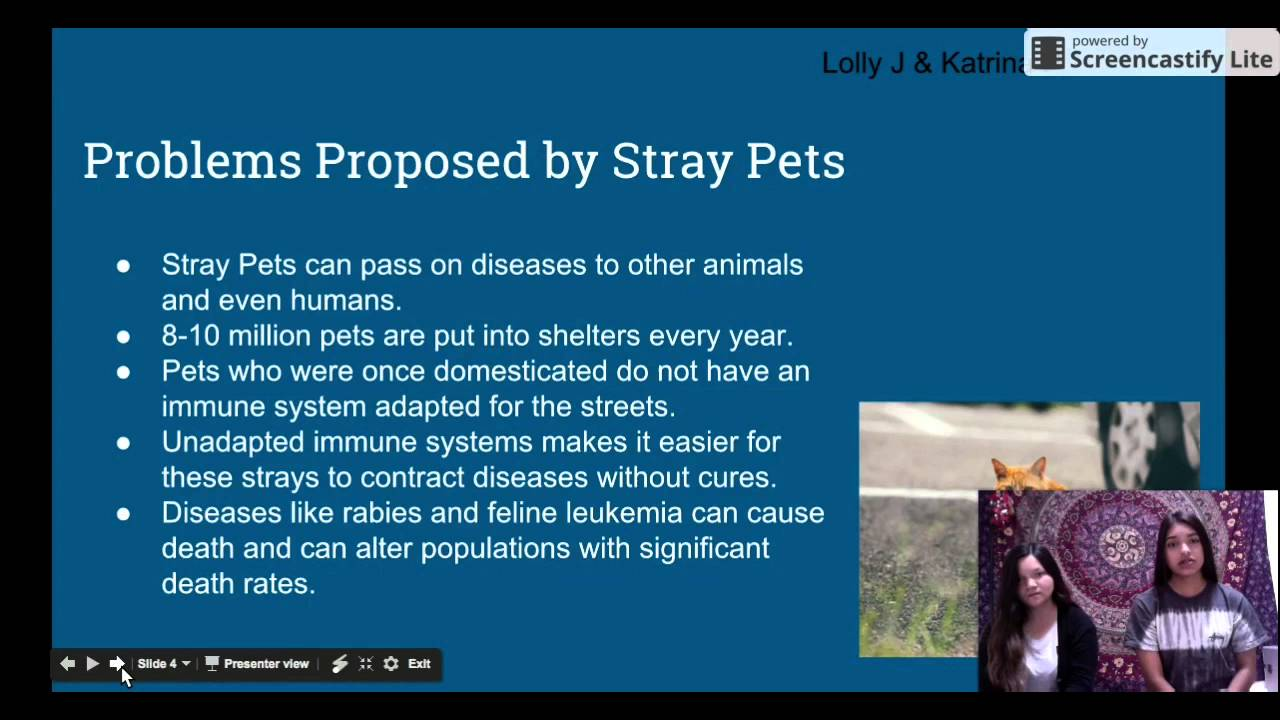 what are the effects of stray pets on human and animal population what are the effects of stray pets on human and animal population