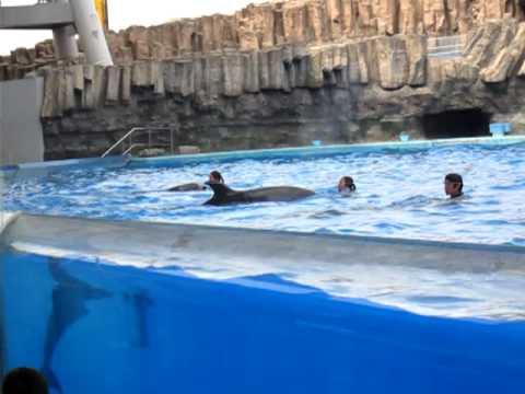cá heo ở nagoyako nhật bản p1