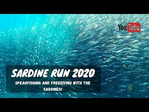 Spearfishing SARDINE RUN 2020 | South Africa