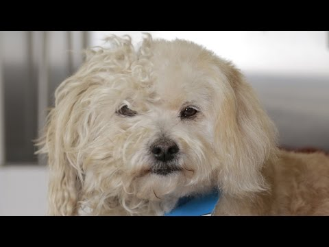 Homeless Dog Gets a Makeover that Saves his Life! - Tobey