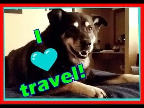 📢 Hotel rooms and Service Dog travel