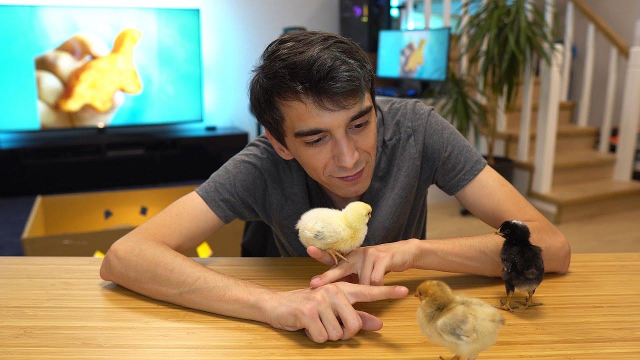 Tavuk Endüstrisinin Görmeni İstemediği Görüntüler  - TÜM GERÇEKLER