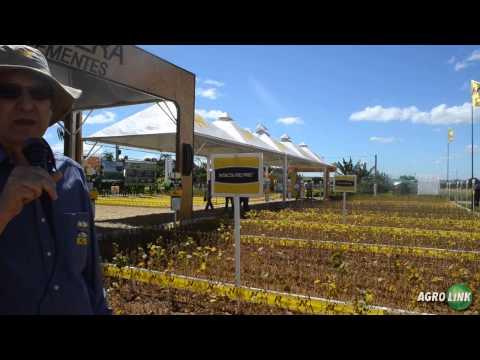 Nidera Sementes tem campo expositor na Agrobrasília