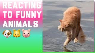 Reacting to funny animals