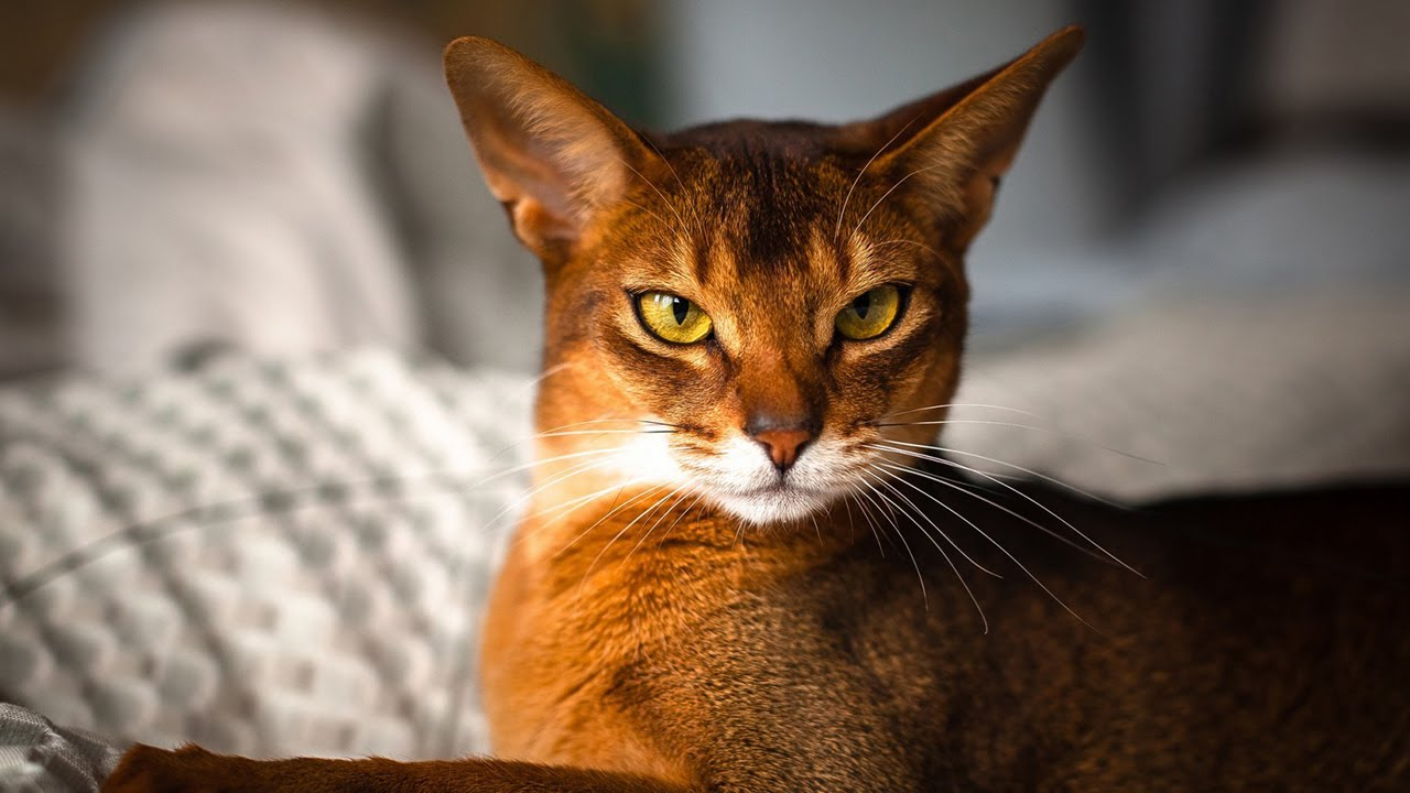 Top 12 Most Beautiful Cat Breeds in the World