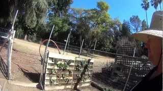 Vertical Gardening: Strawberries In A Palette ~ Fruit In 3 Months!!