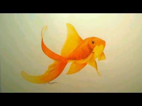 how-to-draw---speed-paint---goldfish---color-pencil
