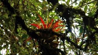 [Unique Ecuador] Visita la Hacienda