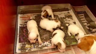 Potty Training pups!