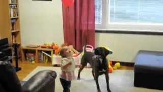 Boxer and Toddler vs Balloon thumbnail