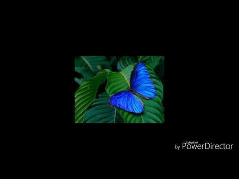 Mi Save - Penias Kombi (PNG Gospel)