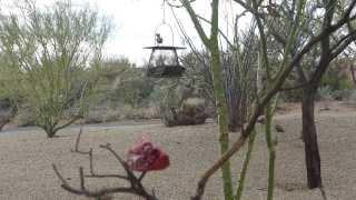 Bird Feeder Action in Tucson