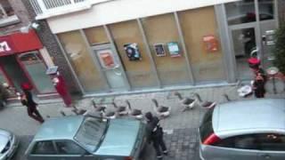 Baixar An ordinary day in Mechelen