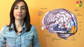 Dyslexie: Bilan des données scientifiques