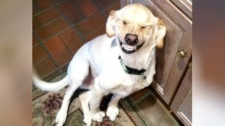 FUNNY ANIMALS feel SORRY FOR BAD ACTIONS - Hilarious ANIMAL REACTION VIDEOS