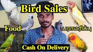 வெளிநாட்டு பறவைகள் | Pet Birds Sales | How To Care Pets | Every Details To Know |