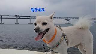 #광안대교2탄 #광안리수변공원 #포동짱이 바라보는 광안…