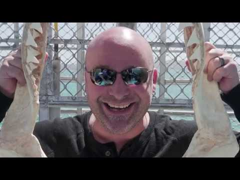 Disturbed On Tour: Port Lincoln Shark Cage Dive
