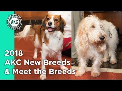2018 AKC New breeds & Meet the Breeds