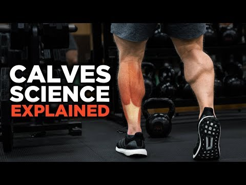 the-most-scientific-way-to-train-calves-(science-explained)