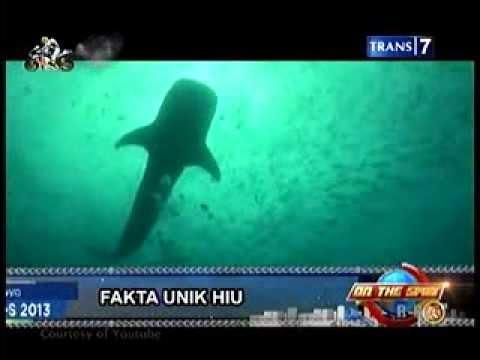 Fakta Unik Hiu - On The Spot Trans|7