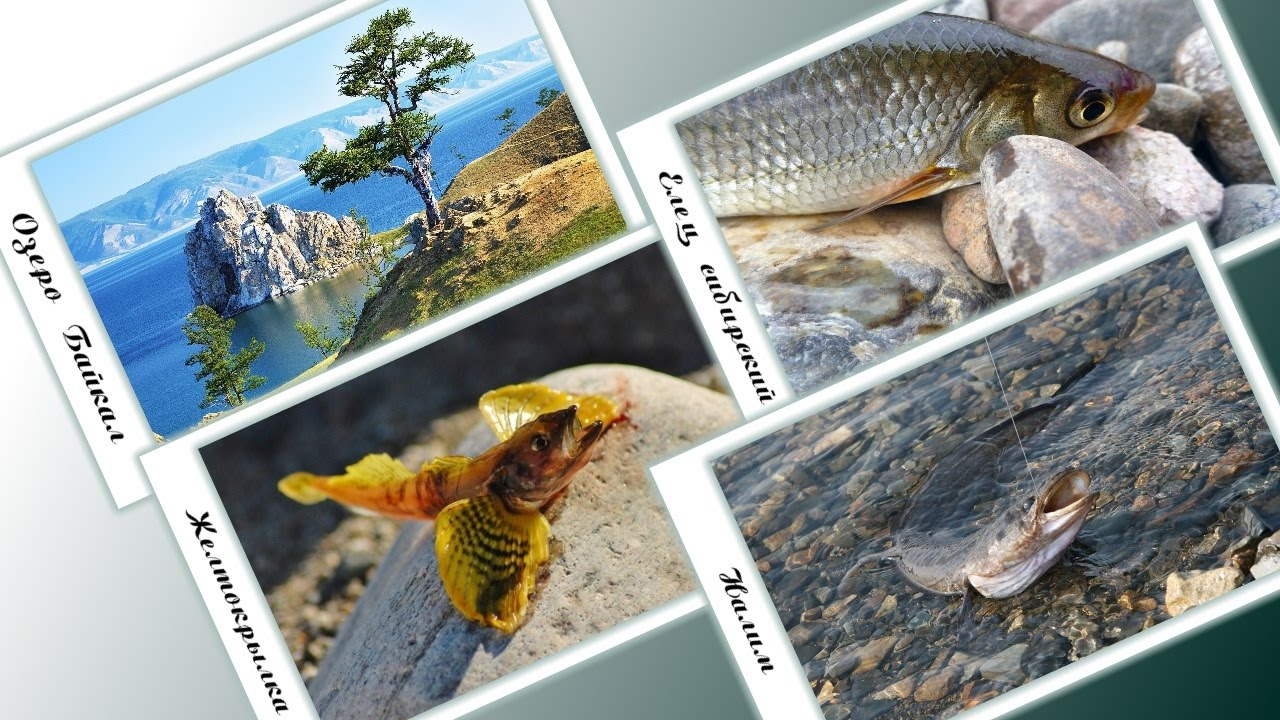 русская рыбалка триада