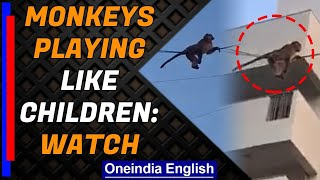 Monkeys play sliding down the electric wire, video goes viral | Oneindia News