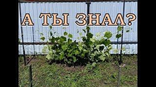 видео опоры для виноградных кустов