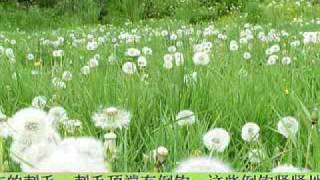 32、天女散花——蒲公英的绝技。.mp4