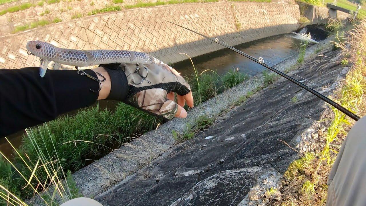 【SNAKE LURE】水路に30cmのヘビを落とすと・・・