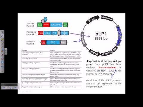 Gene therapy using retrovirus vector